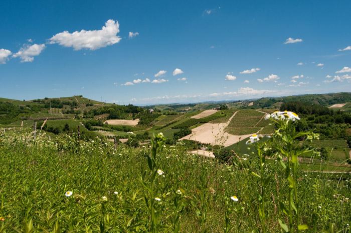 Colline_del_Roero_(Piemonte,_Italia)